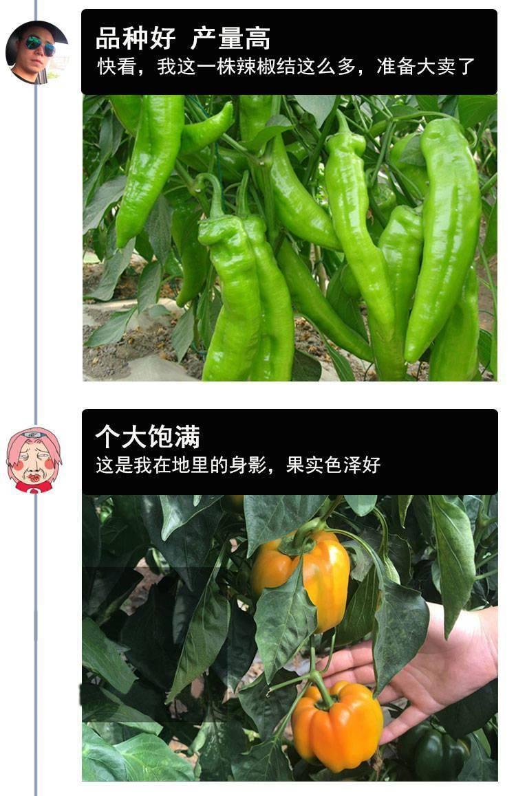 养花不如种菜,阳台养盆小辣椒,边吃边摘,红红绿绿比花好看!