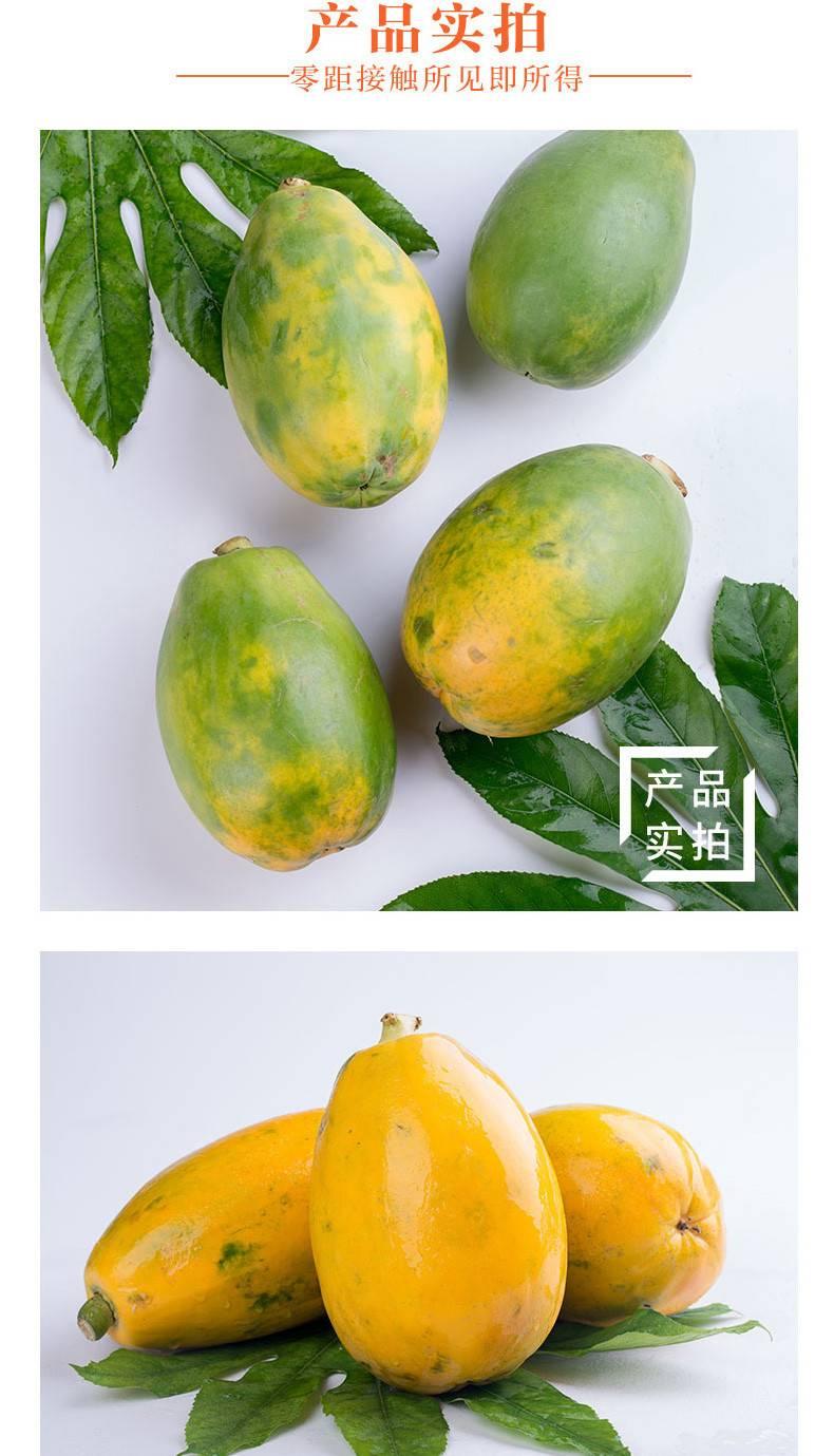 【买5斤送5斤】 云南红心牛奶木瓜10斤装新鲜当季水果包邮【徐闻美食】