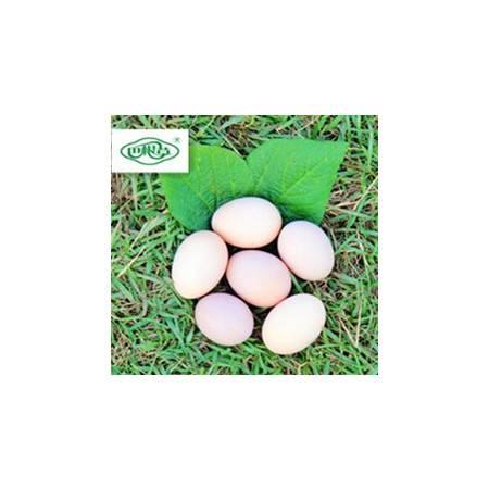 巴根草牌   林间散养   无公害   生态土鸡蛋    60枚 珍珠棉包装