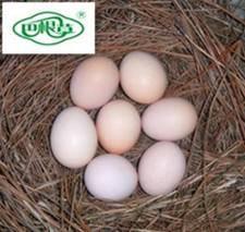 巴根草牌   林间散养   无公害   生态土鸡蛋   60枚   珍珠棉包装  包邮
