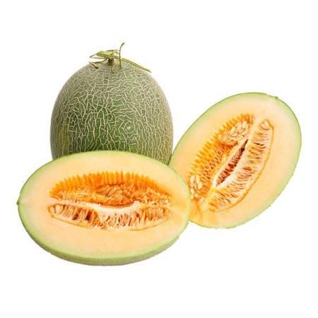 【邮政农品】新疆吐鲁番西州密25号哈密瓜 甜瓜 原产地直发7-8斤