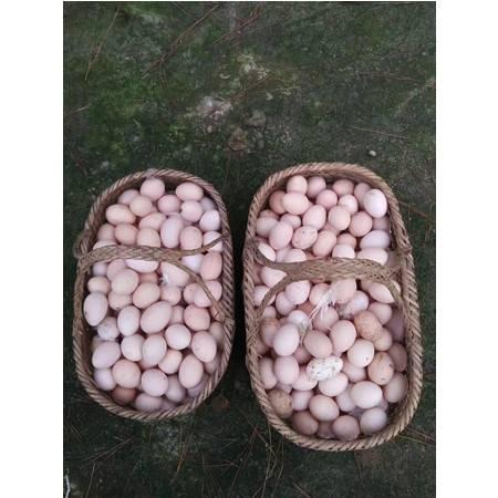 老俵情 泰和特产乌鸡蛋48枚8盒/箱