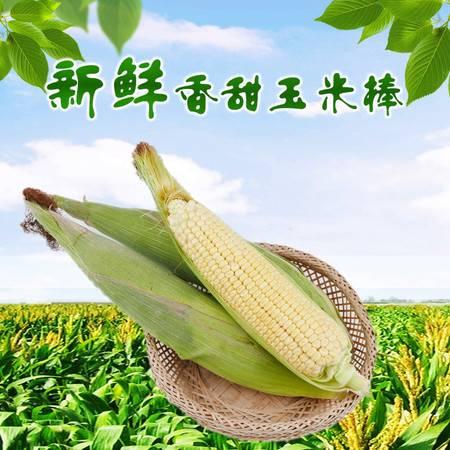 农家自产 太行山新鲜香香甜玉米棒5根(约3.5斤) 非转基因