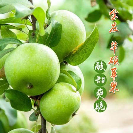 【919爆款】卫辉 金庄 苹果5斤装 酸甜可口 个大品优 新鲜水果 新鲜青苹果