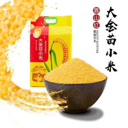 靠山红 小米大金苗小米2.5千克 粒粒亮黄 清香顺滑