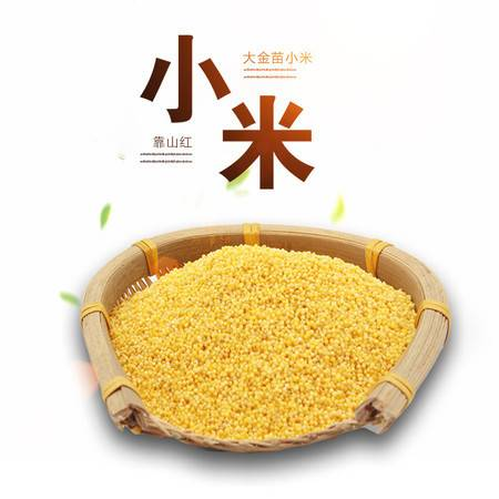 靠山红 大金苗小米1500克 粒粒亮黄 清香顺滑