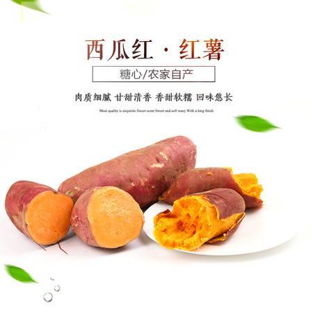 农家自种 西瓜红红薯2500克 糖心地瓜农家小番薯红薯新鲜现挖番薯地瓜