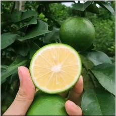 【夏日青柠】领券下单立减3元 刚下树的青柠檬2斤装,万州三峡腹地果园直发