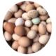 【重庆黔江馆】农家自产 黔江阿蓬江'见哥家'农家散养土鸡蛋50枚包邮