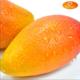 【海南三亚馆】海南三亚贵妃芒果 树上熟4斤装    活动仅限1000箱