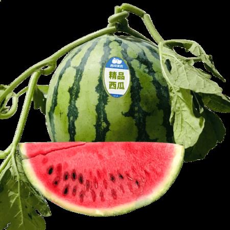 现摘现发 麒麟西瓜7-9斤装1枚装当季新鲜水果