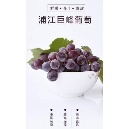 【邮政农品】浦江巨峰葡萄2.5kg新鲜采摘现摘现发