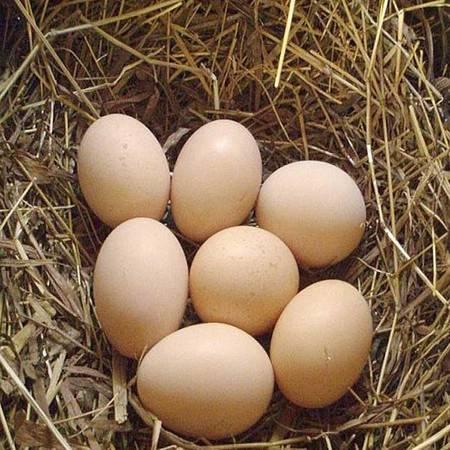 【平顺县扶贫地方馆】平顺农家散养土鸡蛋新鲜草鸡蛋30枚 包邮(偏远地区除外)