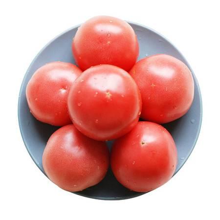 【壶关县扶贫地方馆】农家现摘新鲜西红柿5斤装 自然成熟番茄沙瓤番茄 包邮(偏远地区除外)
