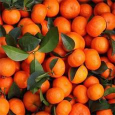 广西特产金秀砂糖橘10斤装产地直销一件包邮【复制】