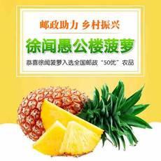 【邮政农品】广东湛江徐闻特产恒尚愚公楼菠萝5斤包邮