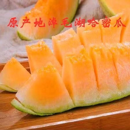 【邮政农品】原产地淖毛湖哈密瓜  12斤左右  双瓜  78元