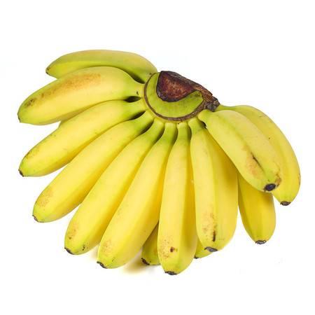 广西小米蕉banana香蕉 新鲜应季水果 香甜芭蕉黄皮HLG
