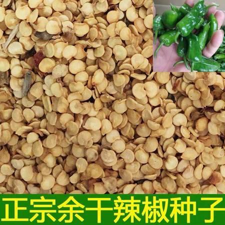 辣椒种子(宁岗)