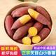 【邮特惠硬核补贴】新小香薯5斤装 临安天目山中小红薯正宗农家蜜薯紫薯地瓜山芋