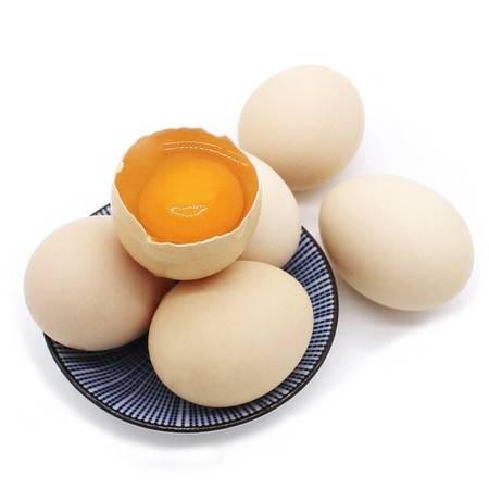 乾礼 正宗土鸡蛋农家散养新鲜纯农村自养天然40枚草鸡蛋柴鸡蛋本笨鸡蛋