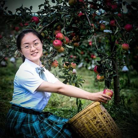 【助农扶贫】云南楚雄禄丰高峰苹果脆甜醇香三种套餐任选全国包邮