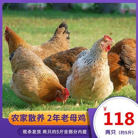 【领劵立减20】农家散养2-3年老母鸡土鸡走地鸡笨鸡柴鸡笨鸡月子鸡新鲜现杀
