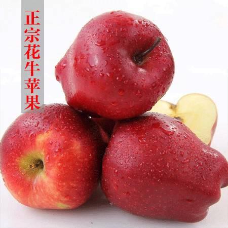 【麦积区扶贫地方馆】天水花牛苹果 75-80mm带箱约10斤装