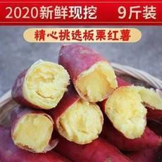 预售【邮政助农】陕西现挖新鲜板栗红薯9斤装红薯是大小搭配装的自然成熟大小都有不能接受下单需谨慎