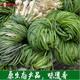 胡葱酸 野葱酸湖南农家自制胡葱酸湘西沅陵特产腌制泡菜下饭菜500g 包邮