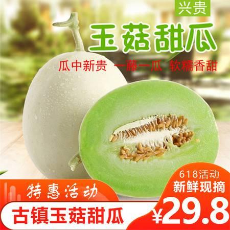 【自贡馆】仙市古镇精品有机甜瓜1个/2个装包邮 一藤一瓜 6月中旬成熟发货