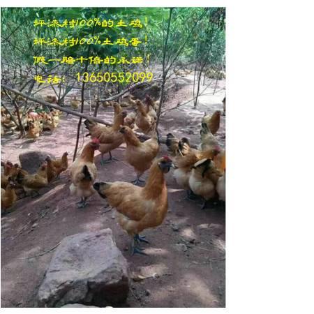 铜梁【坪漆村】土鸡+土鸡蛋