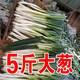 山东铁杆大葱 新鲜大葱农家自种 新鲜蔬菜 甜葱 长葱 5斤包邮