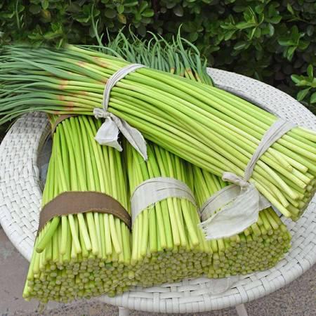 农家自种蒜苔 蒜苔 蒜薹 河南蒜苔新鲜蔬菜  保鲜库出货