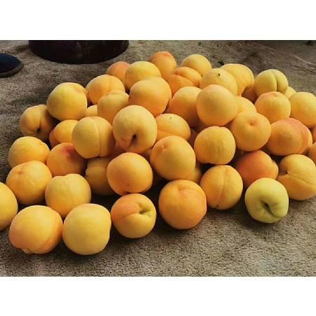 【聊城馆】 现摘黄桃新鲜水果5斤带箱包邮大脆桃子批发应季时令应季毛桃