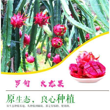 黔南罗甸 【火龙果  15枚礼盒装】 (约9.2--9.8斤) 省内包邮
