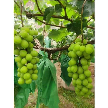 《乐都振兴馆》乐都禾韵种养殖合作社种植绿色农产品   青提3斤装