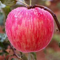 【咸阳邮政】马栏红晚熟红富士苹果80mm【18枚新春装】当季新果包邮