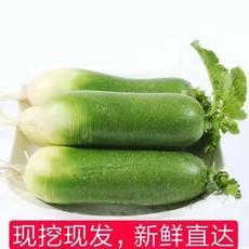 【扶贫助农】【5斤新鲜白萝卜】陕西渭南脆甜带泥现挖现发新鲜包邮