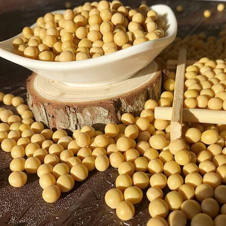 豫西380g精品黄豆