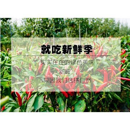 辣椒新鲜3斤新鲜朝天椒小尖椒生的小米椒农家红辣椒泡椒尖椒