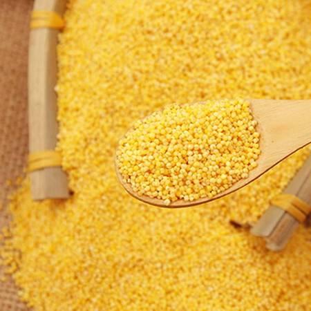 靠山红  大金苗小米1000克 粒粒亮黄 清香顺滑