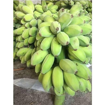 特产水果新鲜粉蕉苹果芭蕉小米蕉9-10斤