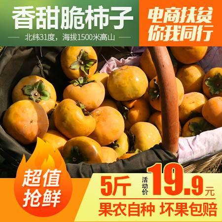 (谷城)2019年新鲜甜脆柿子5斤,谷城本土助农扶贫产品当季现摘