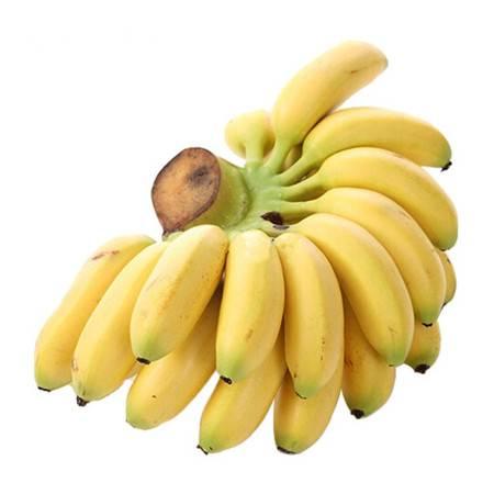 【领券立减5元】广西小米蕉5斤9斤新鲜香蕉当季水果小鸡蕉非皇帝蕉芭蕉(发货约七成熟,收到需崔熟)