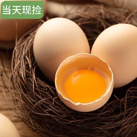 【南部扶贫馆】碑院农家自产土鸡蛋10枚装