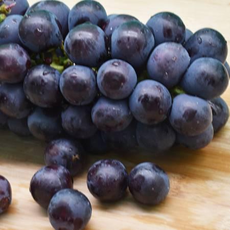 天葡庄园葡萄