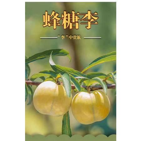 【关岭蜂糖李】果实硕大饱满  果色绿中带黄  果肉细腻 果味甘甜如蜂蜜 李中贵族