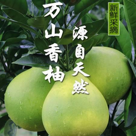 包邮铜仁万山2020年香柚5斤10斤 白心新鲜柚子孕妇水果非红心柚蜜柚