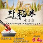 【邮政助农惠民】邱村白马湖虾稻米1公斤米砖 农家虾田米1kg新米 绿色有机大米